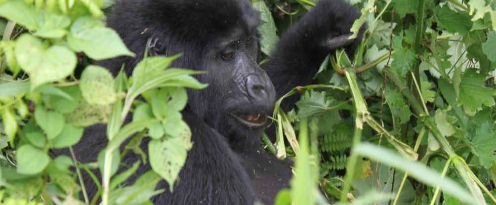 Primaten und Savanne