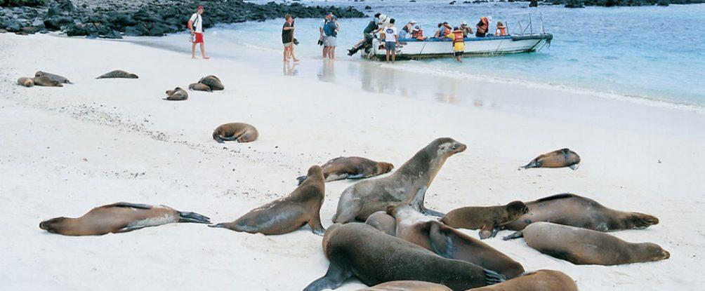 Galapagos – Darwins Arche